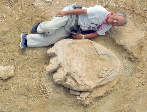 Óriási dinoszaurusz-lábnyomot találtak Mongóliában